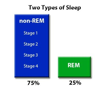 REM & non-REM: Two Types of Sleep